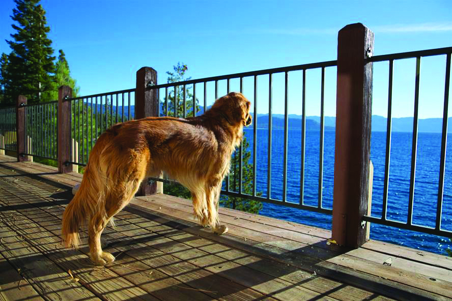 Dog Looking at Lake Tahoe