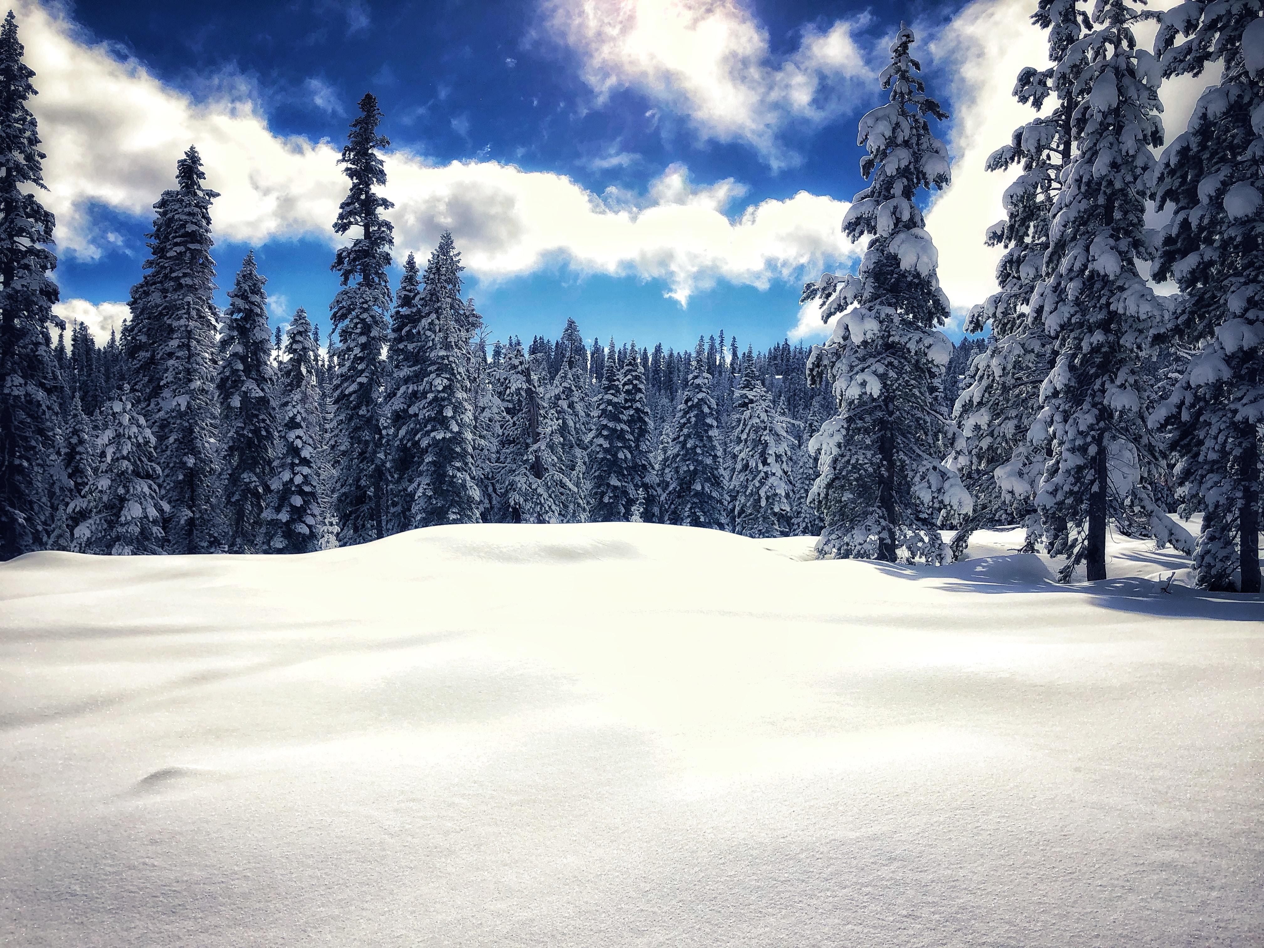 Tahoe Wilderness